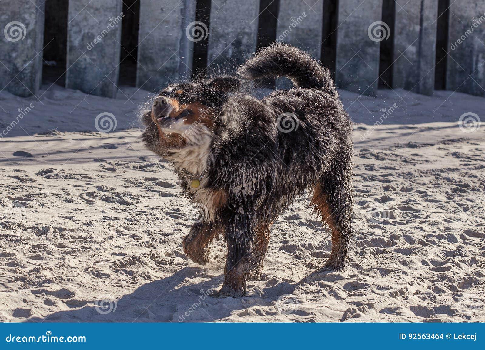 Giochi del cane sporco