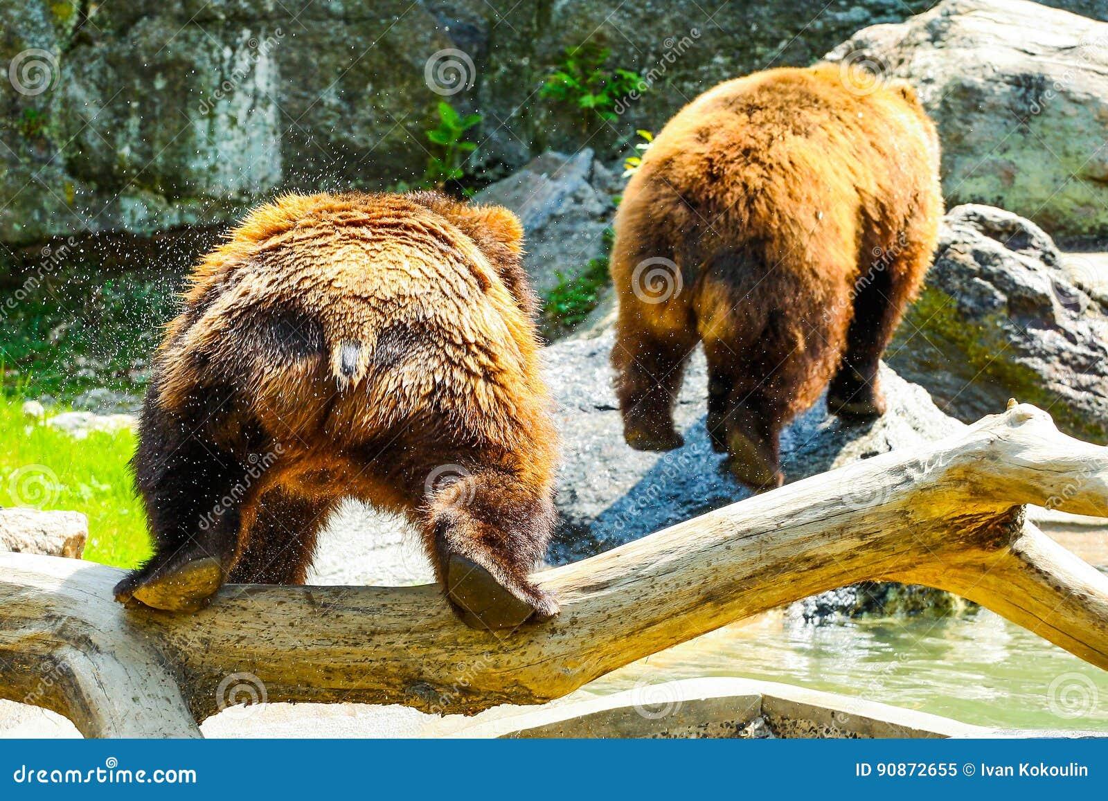 Gioco degli orsi