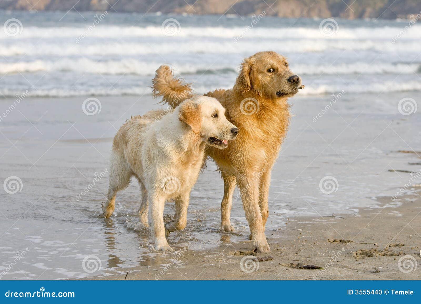Gioco dei cani