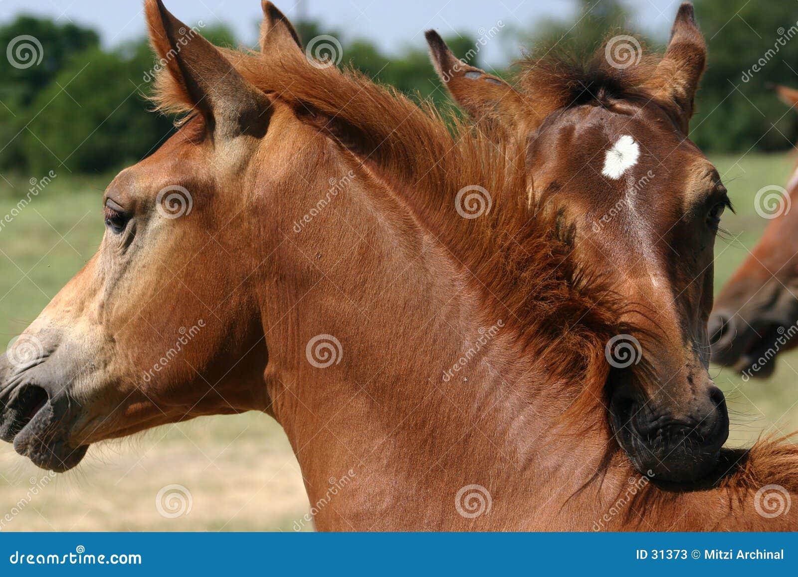 Gioco del cavallo