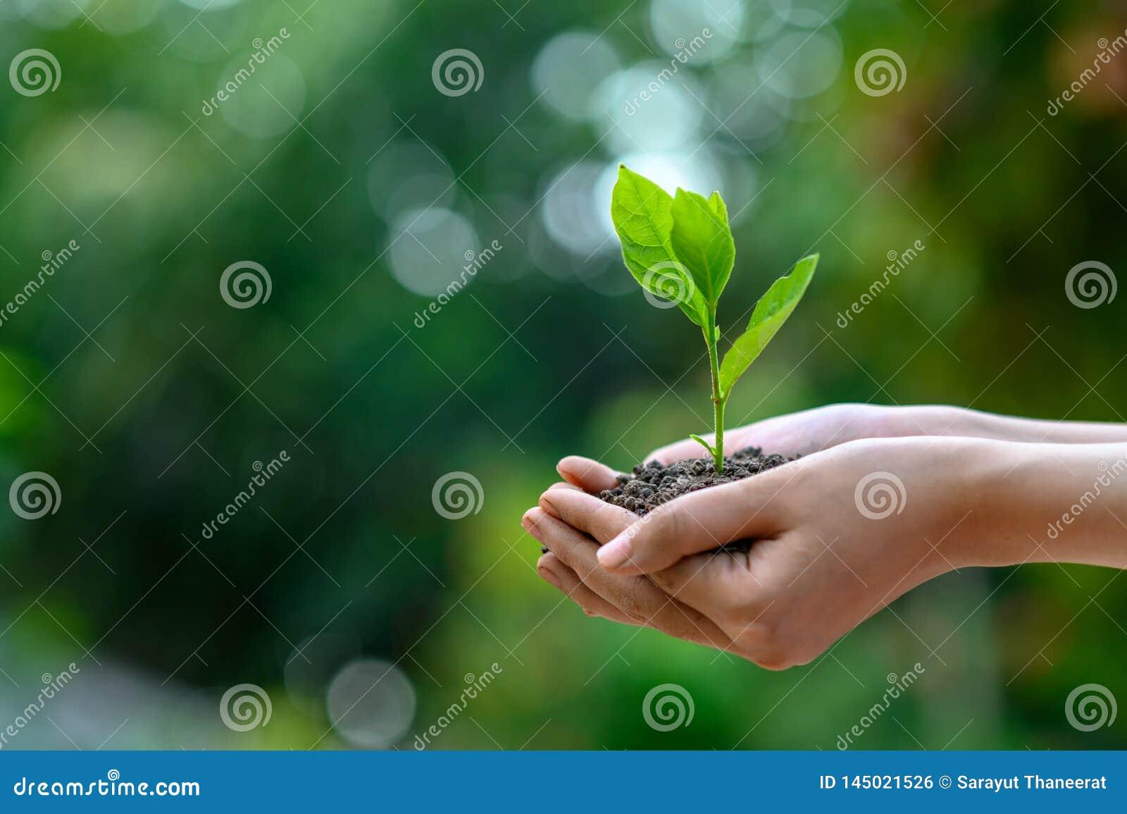 Giornata per la Terra dell ambiente nelle mani degli alberi che crescente le piantine Albero femminile della tenuta della mano de