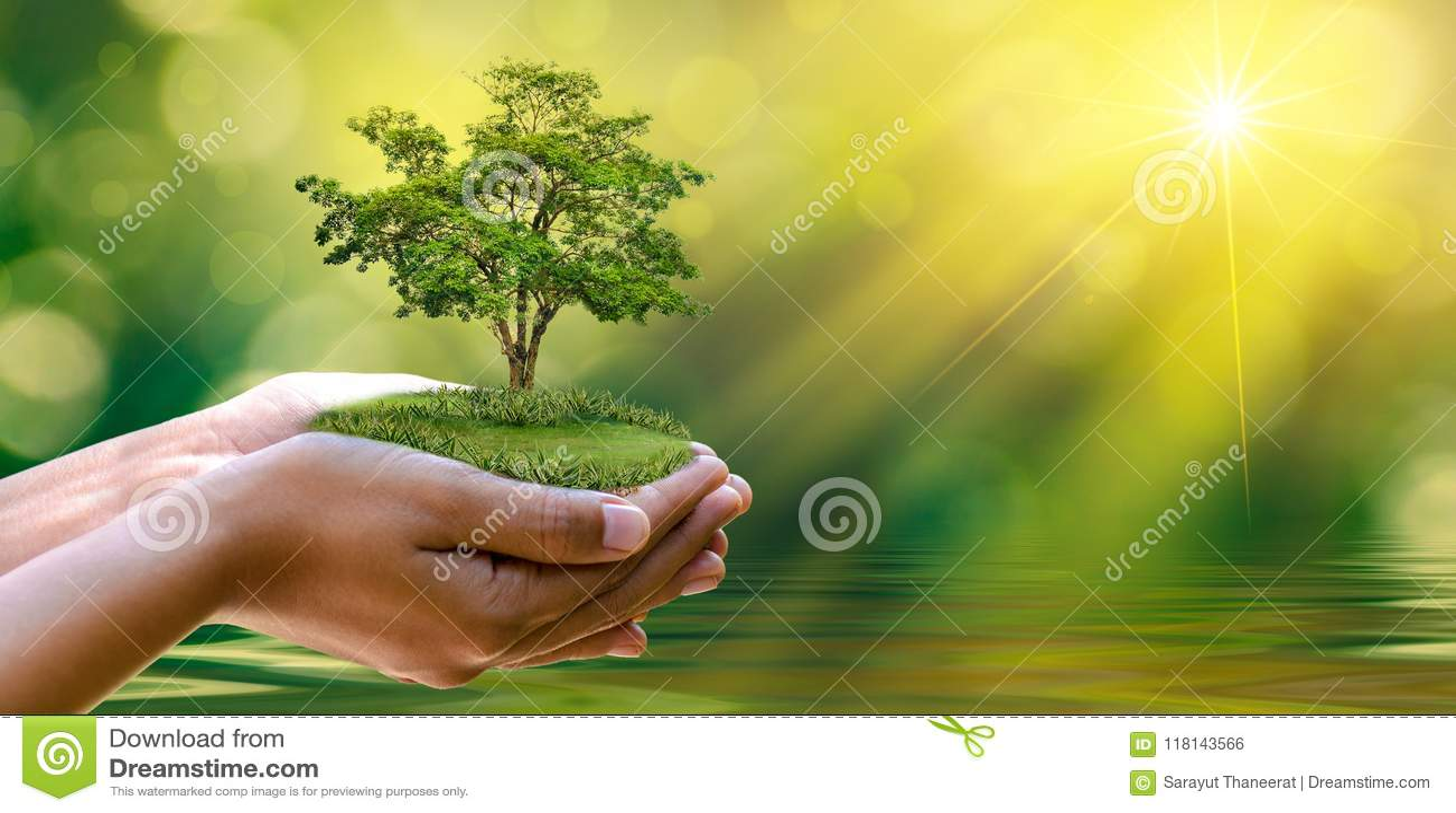 Giornata per la Terra dell ambiente nelle mani degli alberi che crescente le piantine Bokeh si inverdisce l albero femminile dell