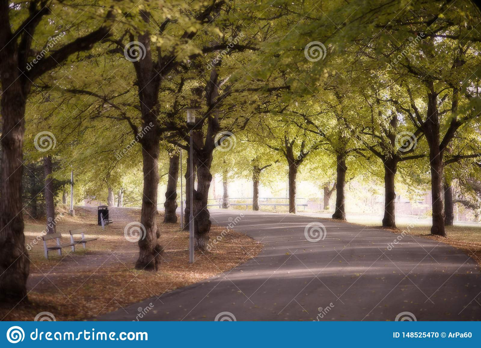 Giorno brillante di autunno in parco