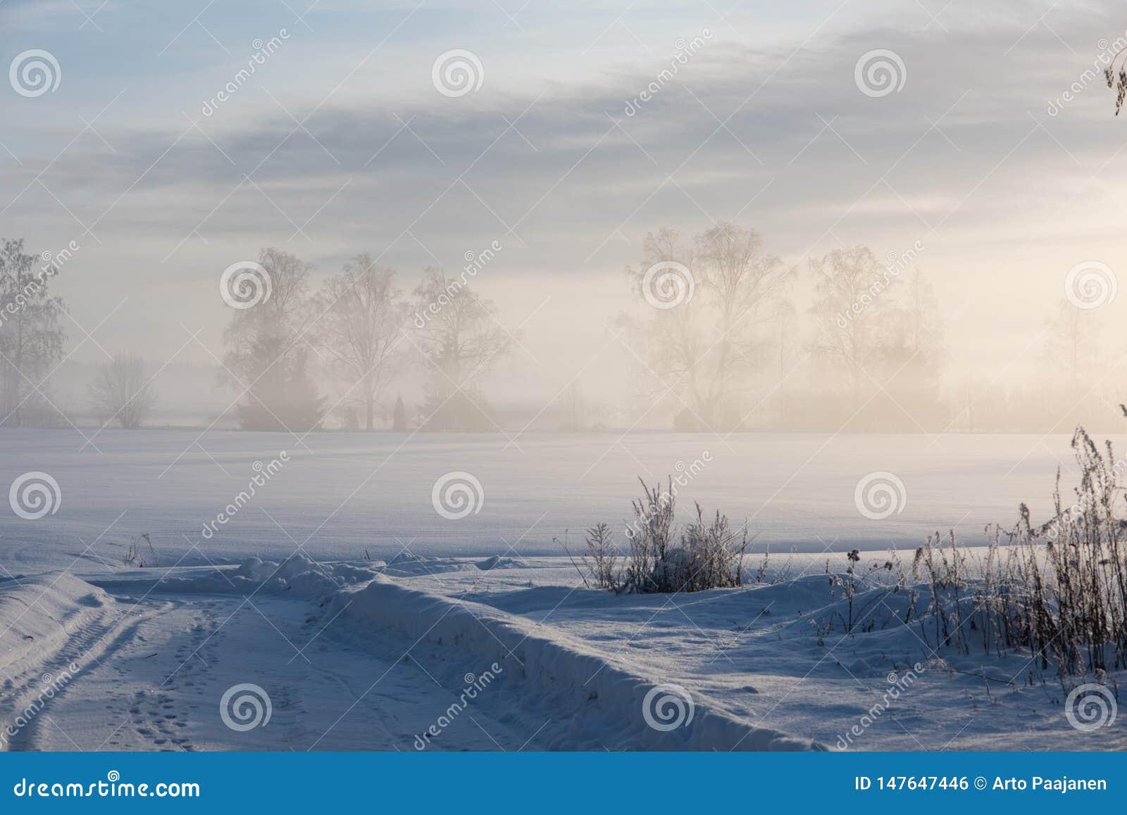 Giorno di inverno freddo stesso in campagna