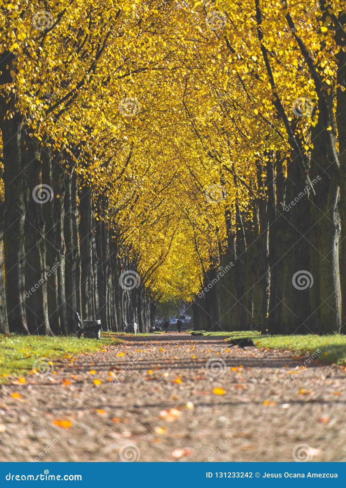 Giorno variopinto di autunno della passeggiata del parco