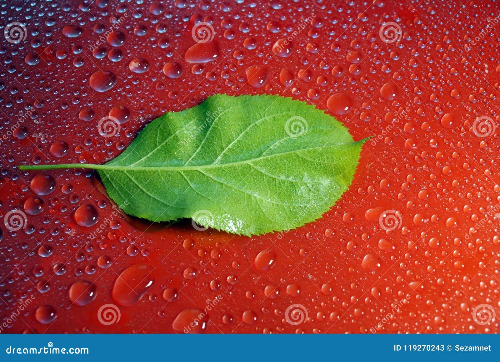 Giovane Apple verde copre di foglie e gocce di acqua sull ecologia rossa del fondo