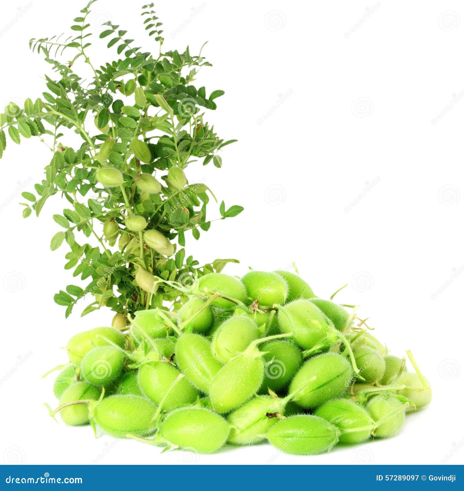 Pianta verde da appartamento con fiore bianco la scelta - Gardenia pianta da interno o esterno ...