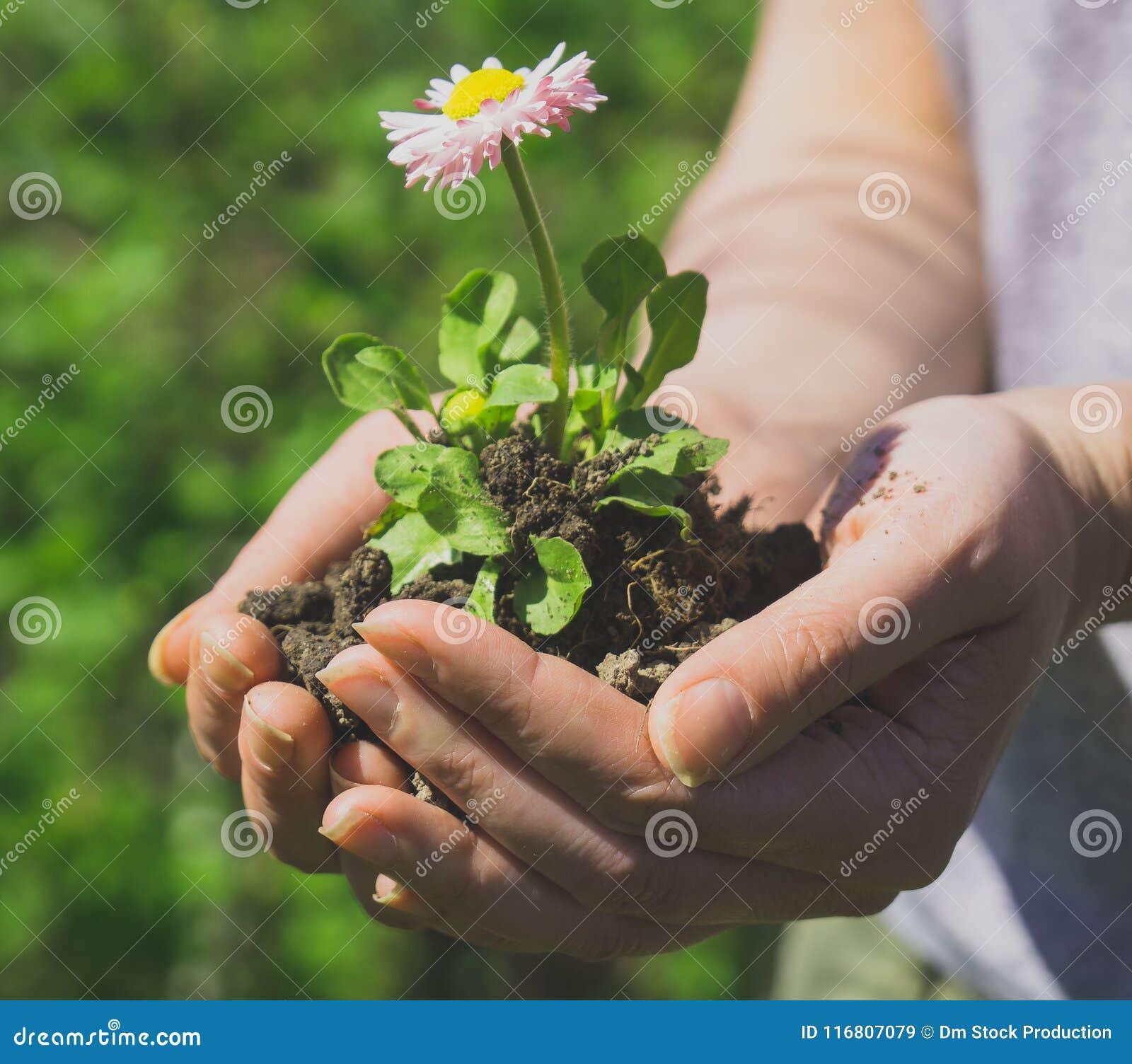 Giovane donna che tiene un fiore