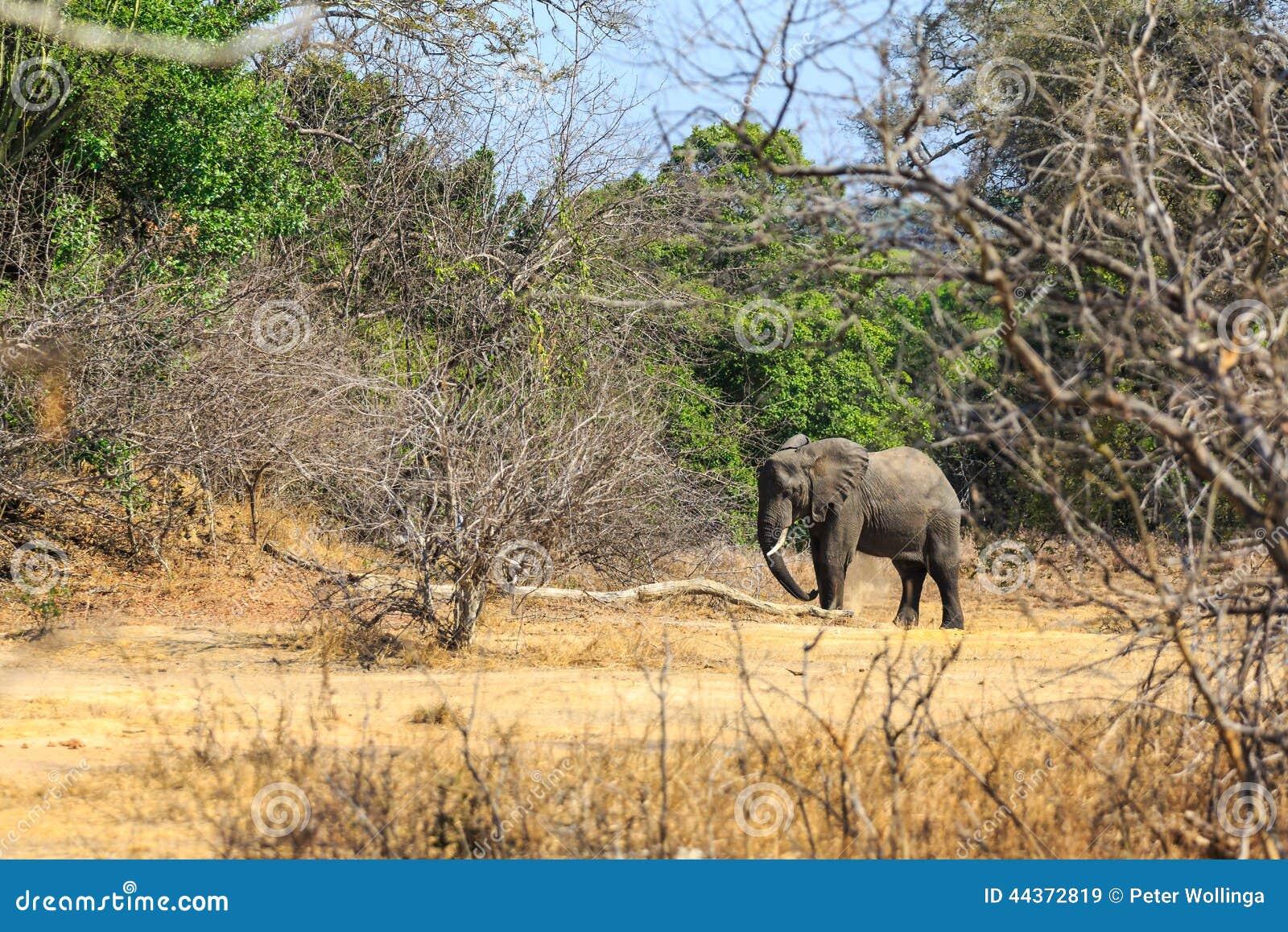Giovane elefante in una foresta