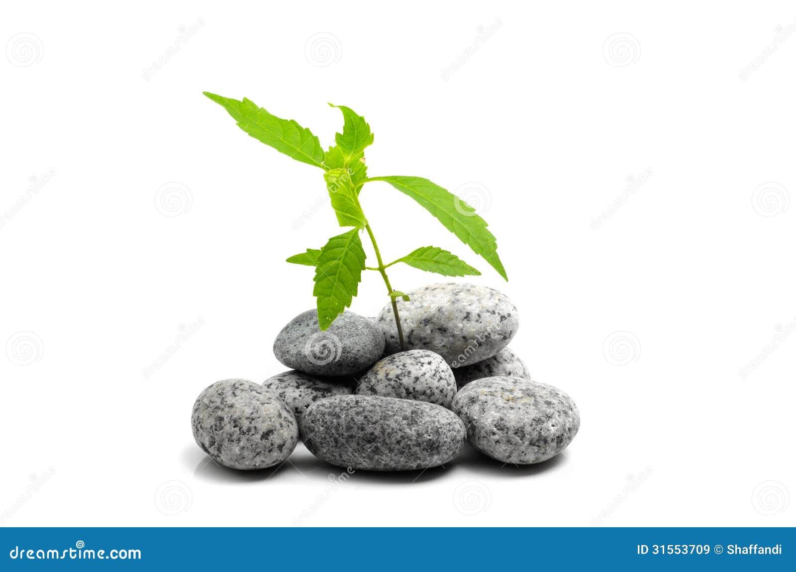 Giovane germoglio della pianta verde che cresce sulle for Pianta da pavimento verde