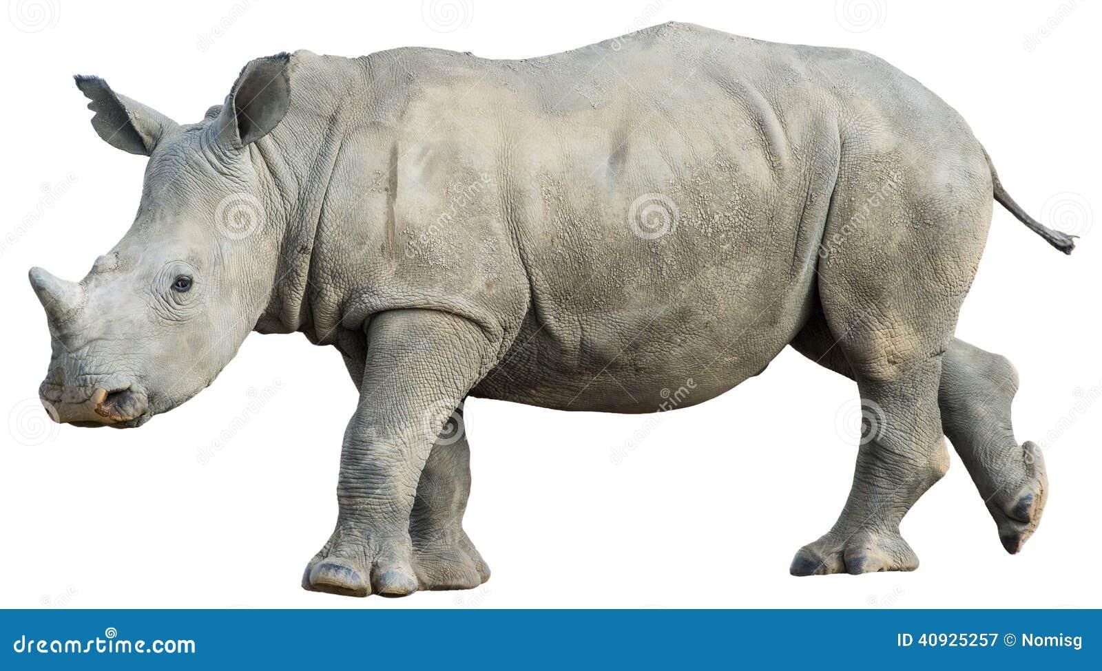 Giovane rinoceronte isolato