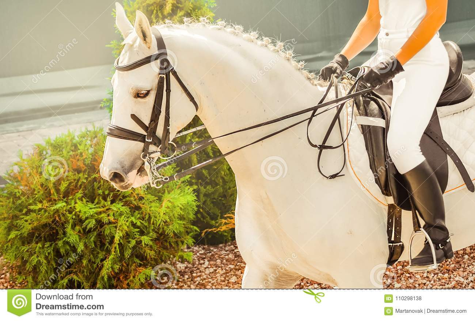 Giovani Donna E Cavallo Bianco Eleganti Del Cavaliere Prova