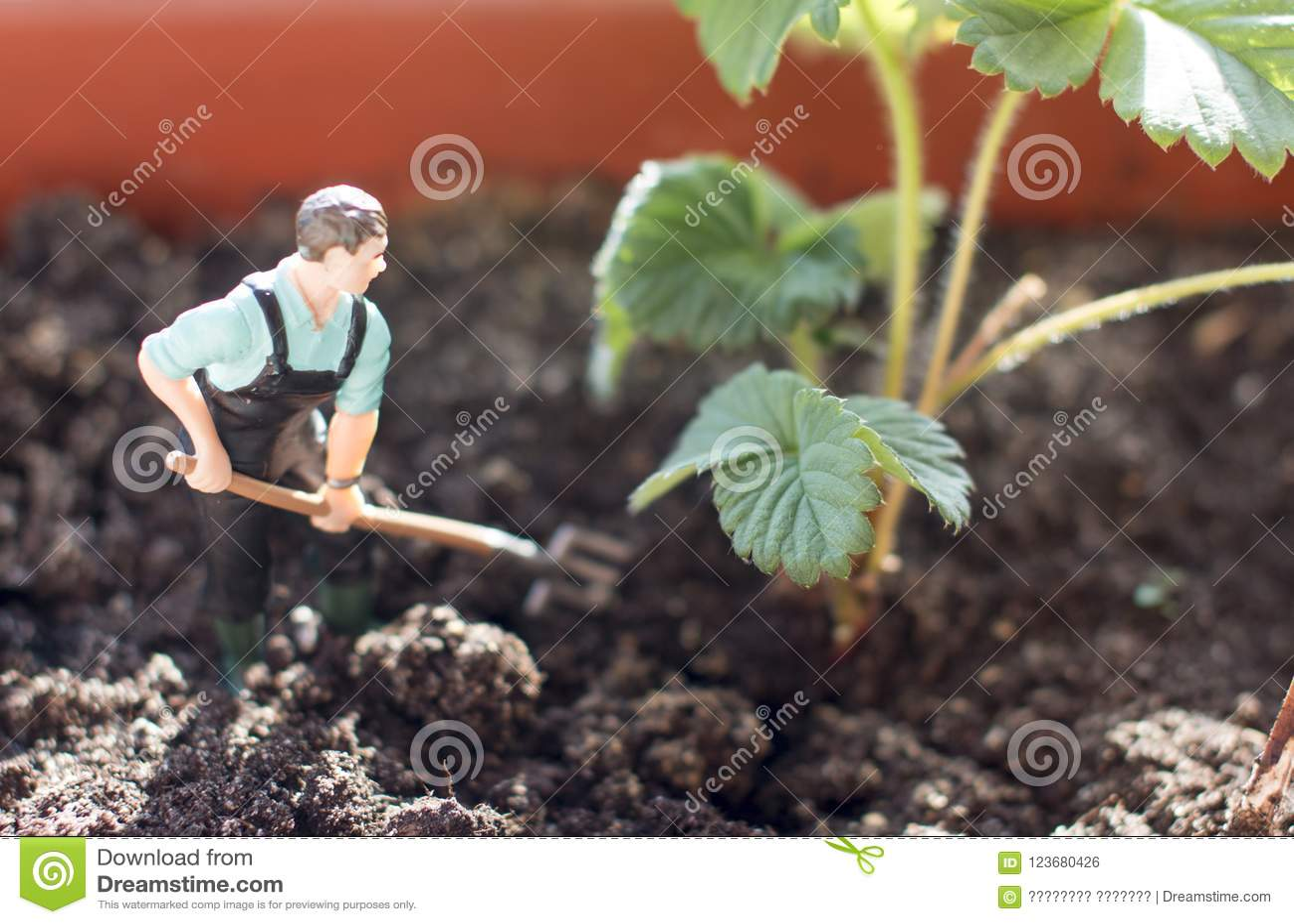 Giovani raccolti dell agricoltore