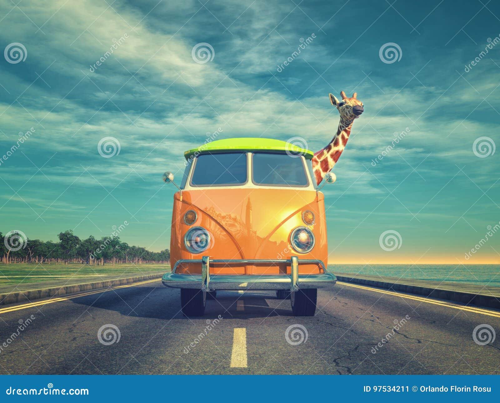 Girafa pelo carro na estrada