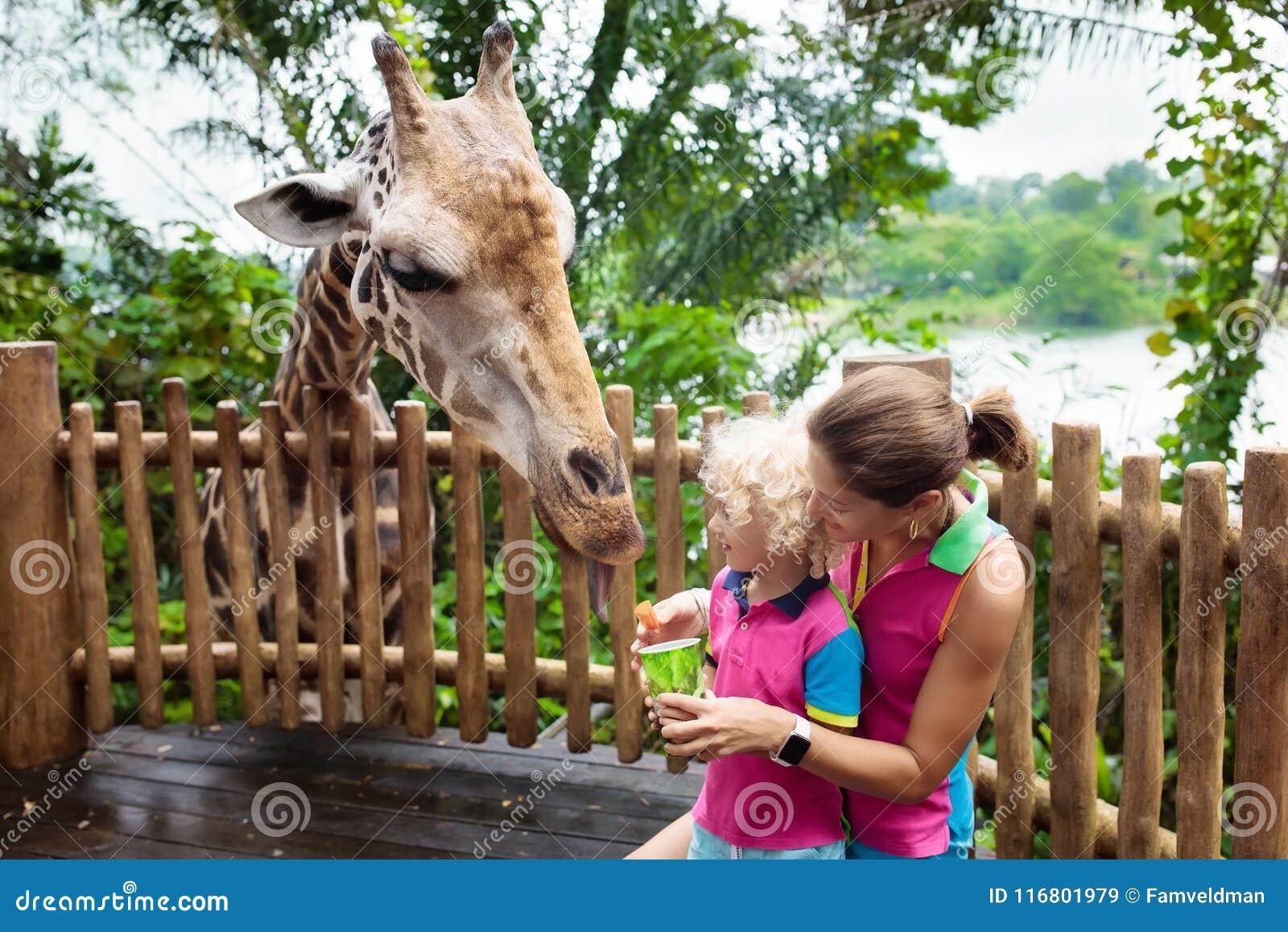 Girafe d alimentation d enfants au zoo Famille au parc de safari