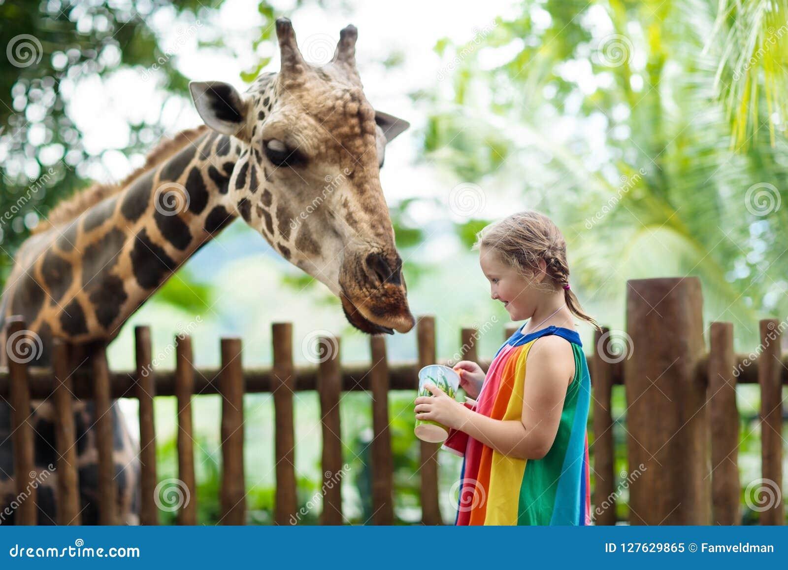 Girafe d alimentation d enfants au zoo Enfants au parc de safari