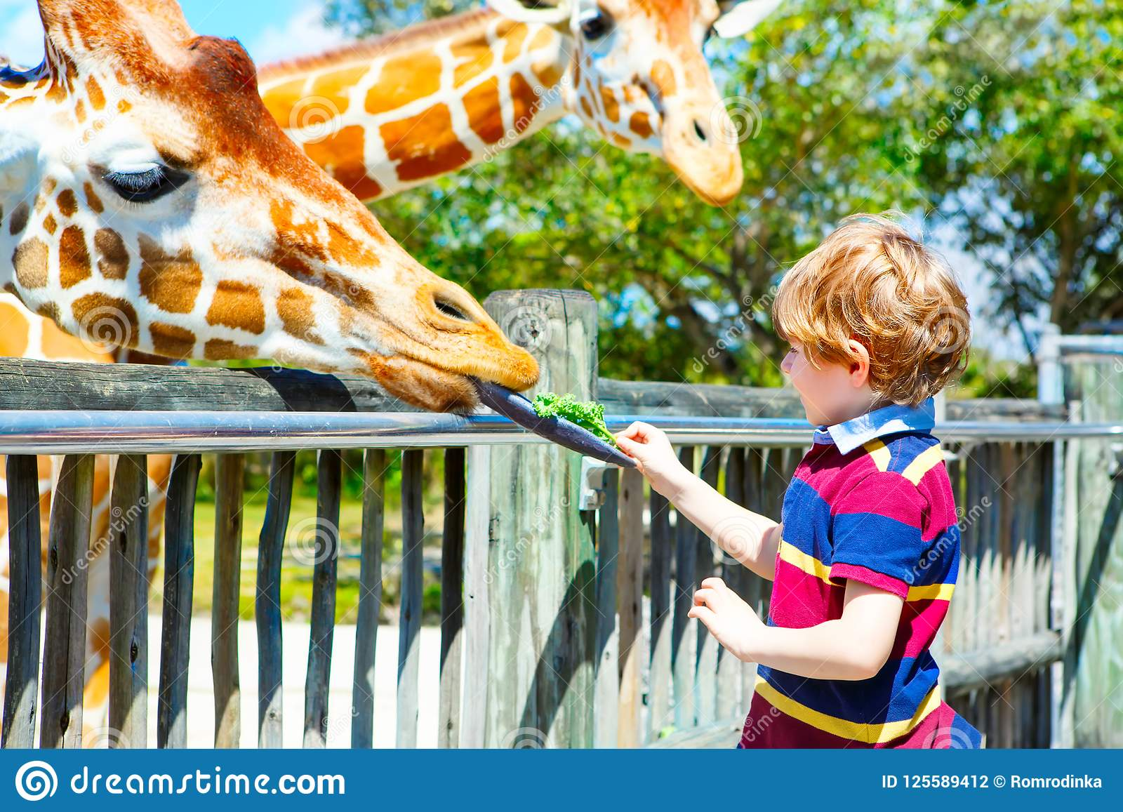 Girafe de observation et de alimentation de peu de garçon d enfant dans le zoo Enfant heureux ayant l amusement avec le parc de s