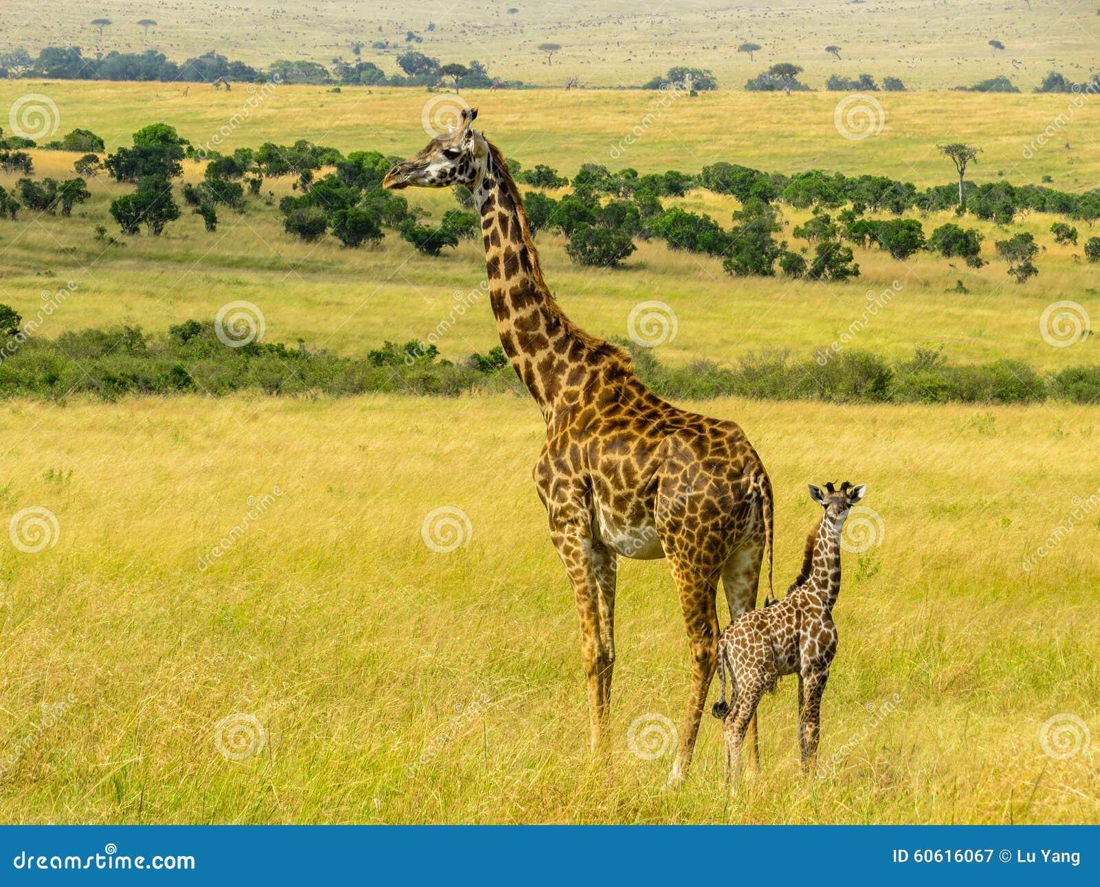 Giraff家庭