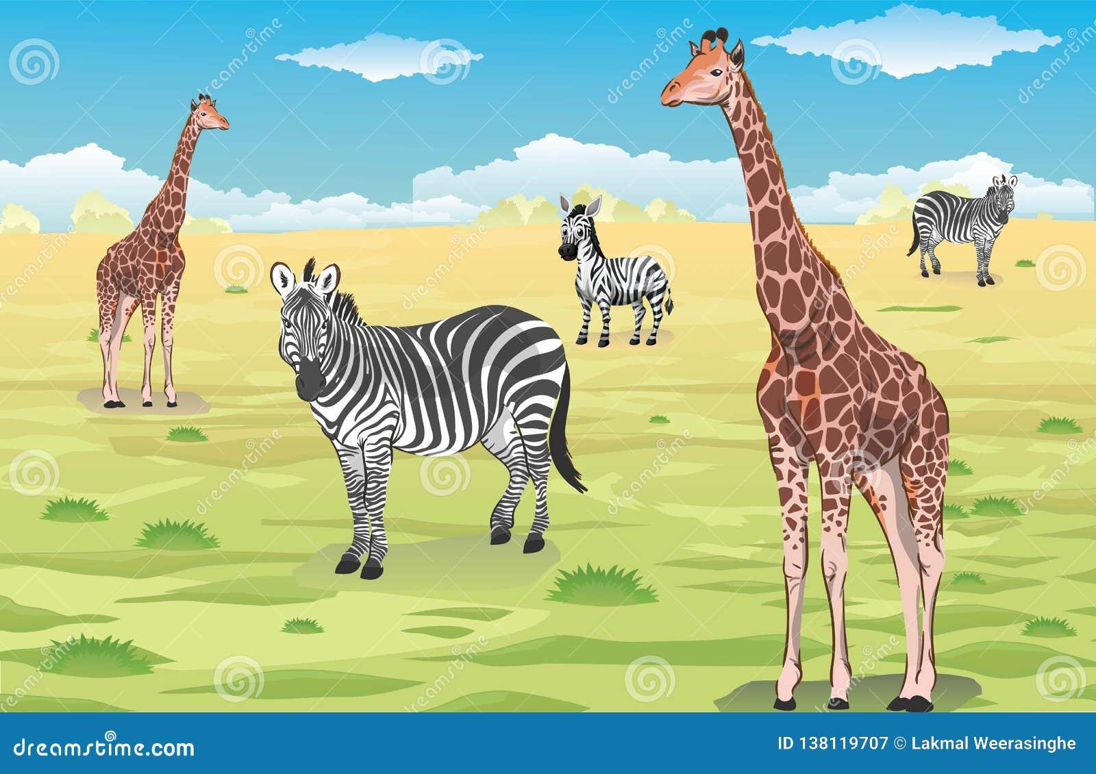 Giraff och sebror