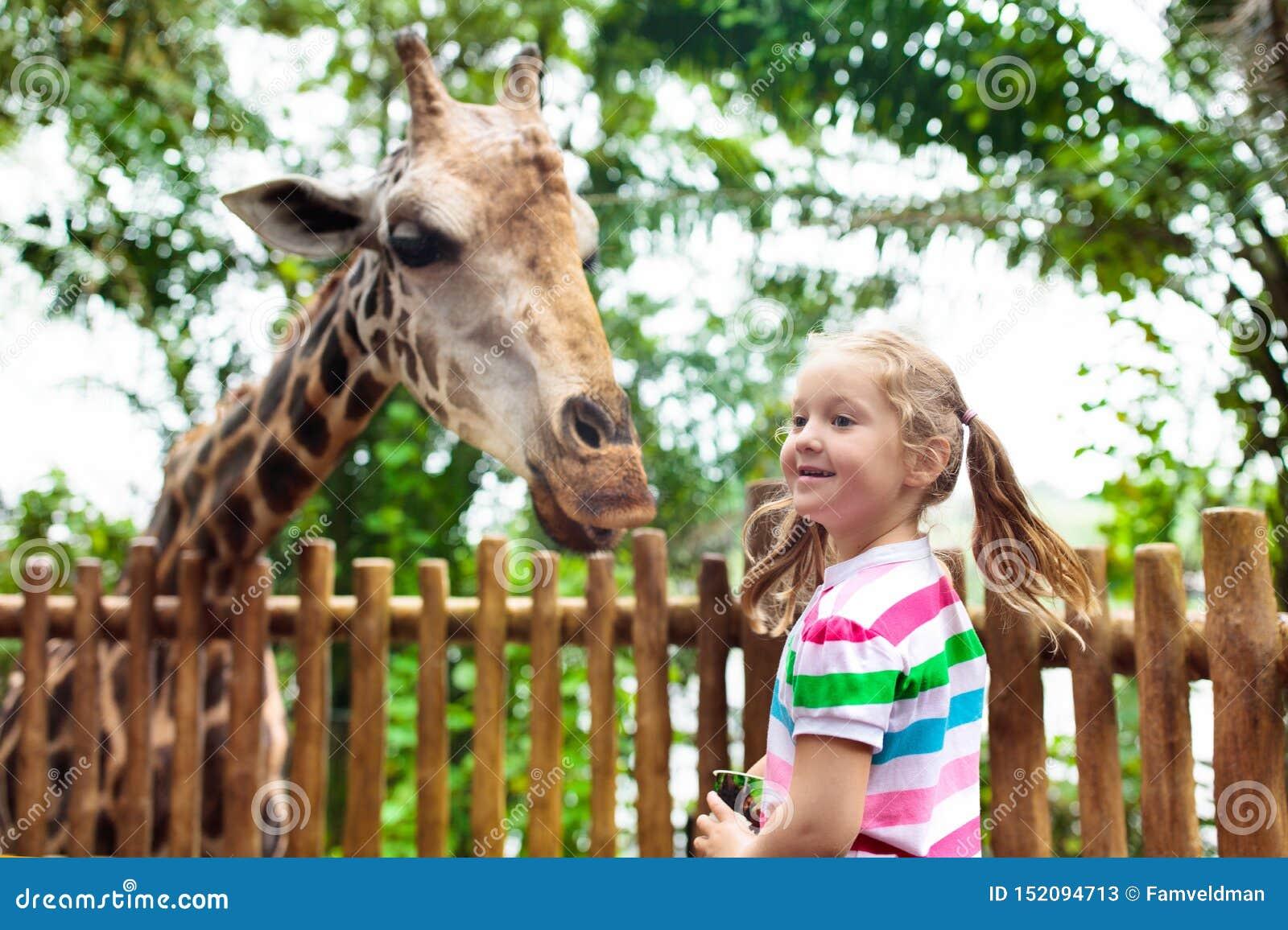 Giraffe τροφών παιδιών στο ζωολογικό κήπο Τα παιδιά στο σαφάρι σταθμεύουν