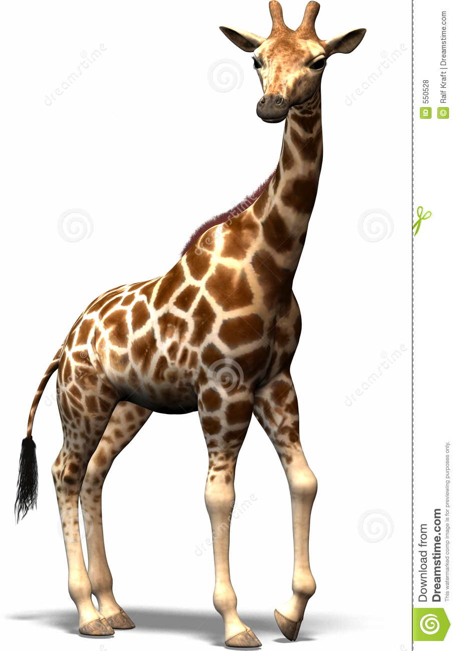 Giraffe Royalty Free Stock Photos - Image: 550528