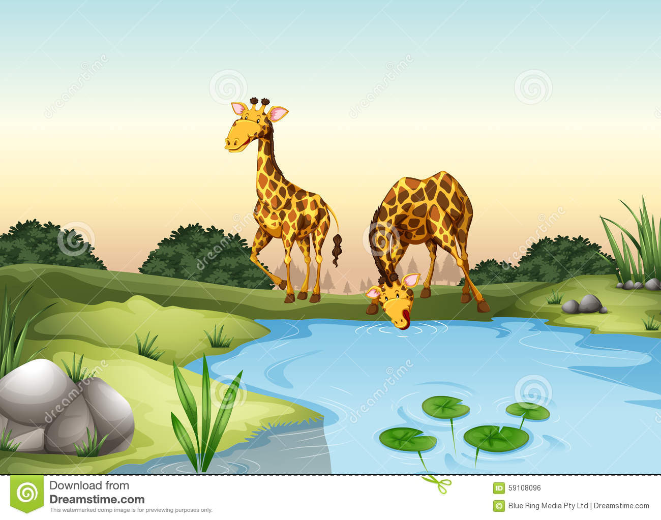 Giraffe Drinking Water At The Pond Stock Vector ...