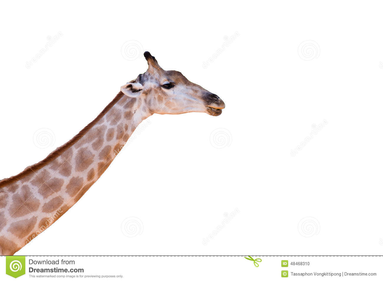 giraffe head white background - photo #11