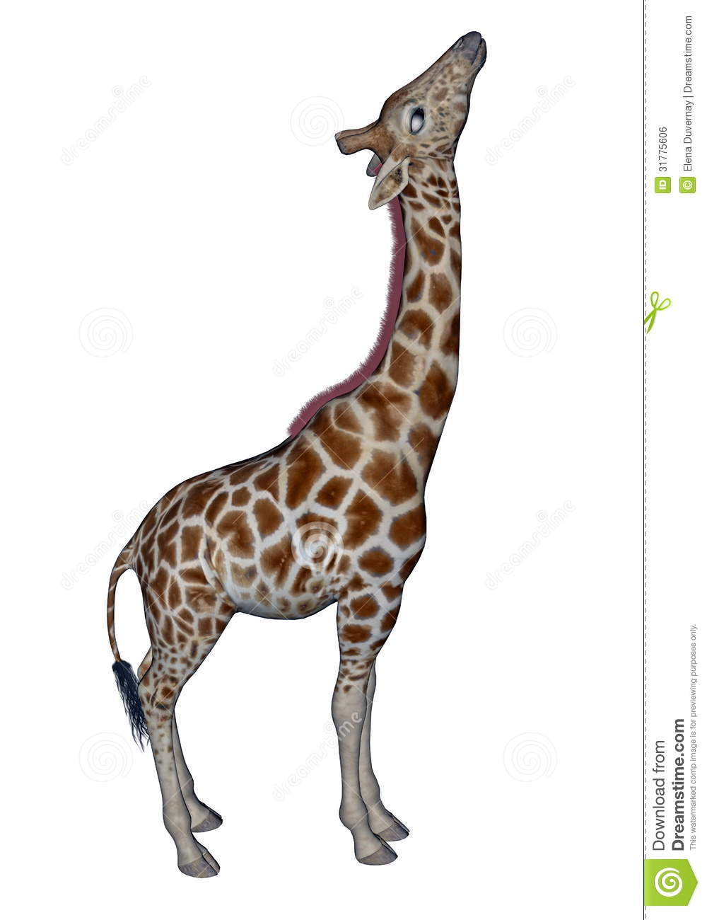 giraffe head white background - photo #18