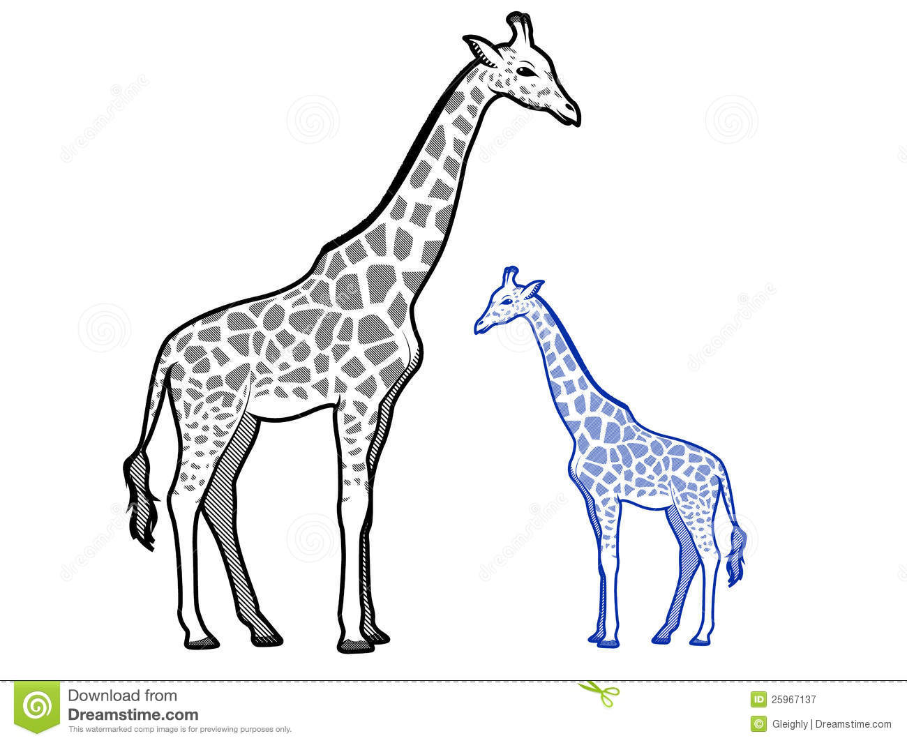 Giraffe Outlines stock vector. Illustration of realistic ...