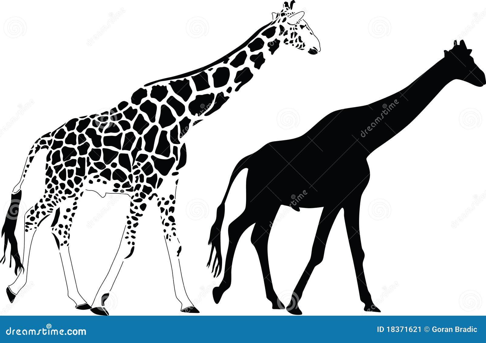 Giraffe Silhouette Vector Stock Image Image 18371621