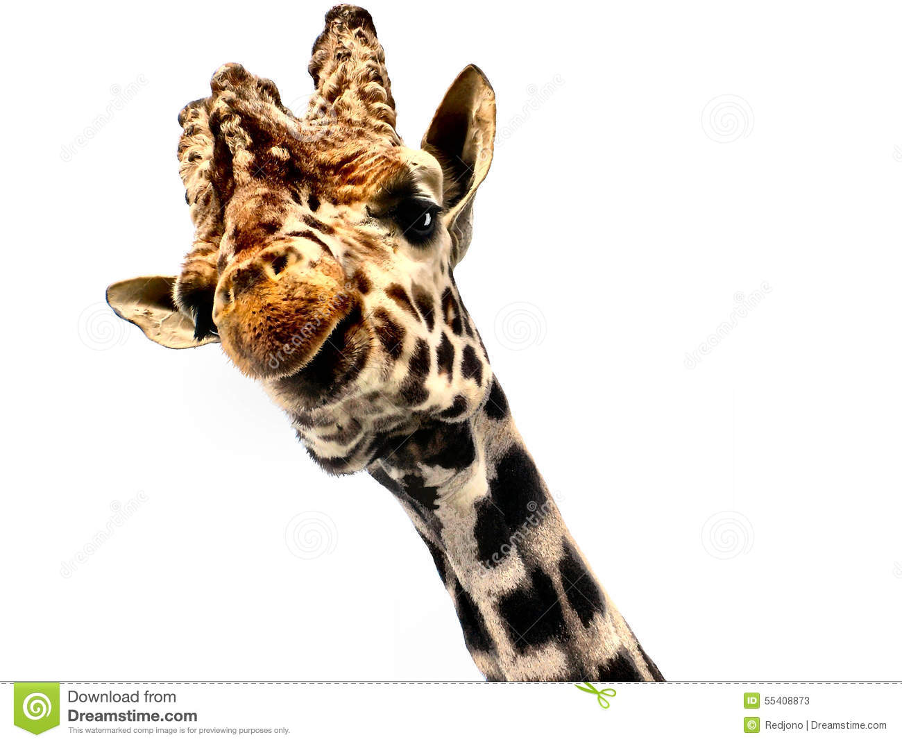giraffe head white background - photo #27