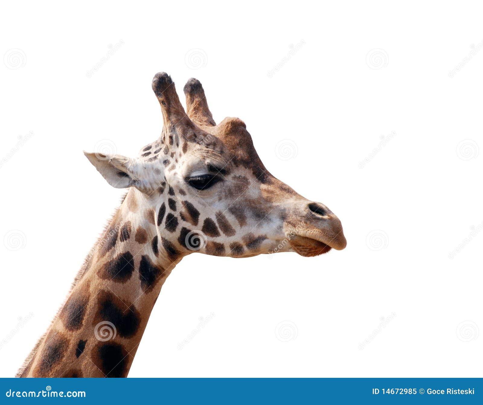 Giraffekopf getrennt