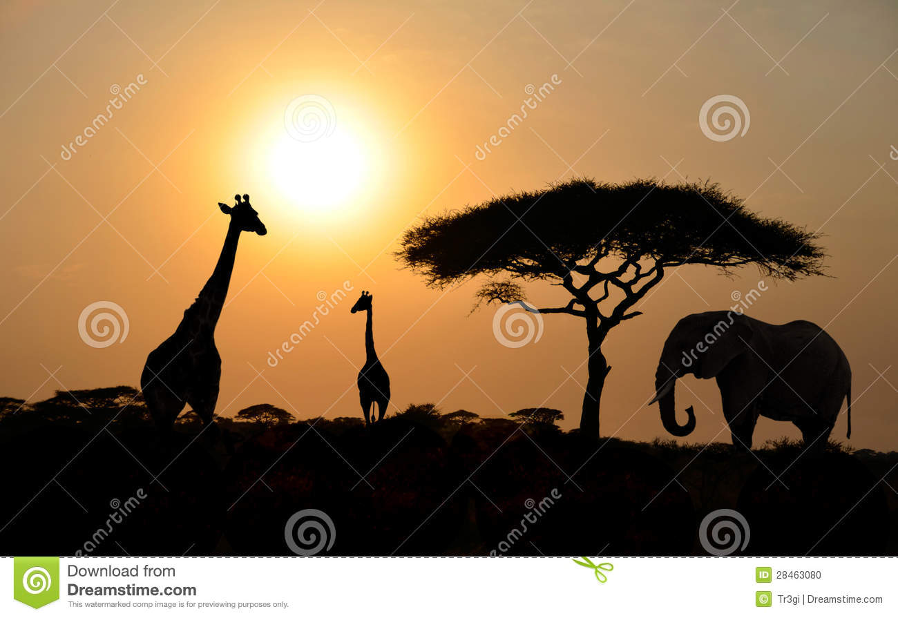 hd wallpapers cartoon giraffe vector hfn.eirkcom.today, Badezimmer ideen