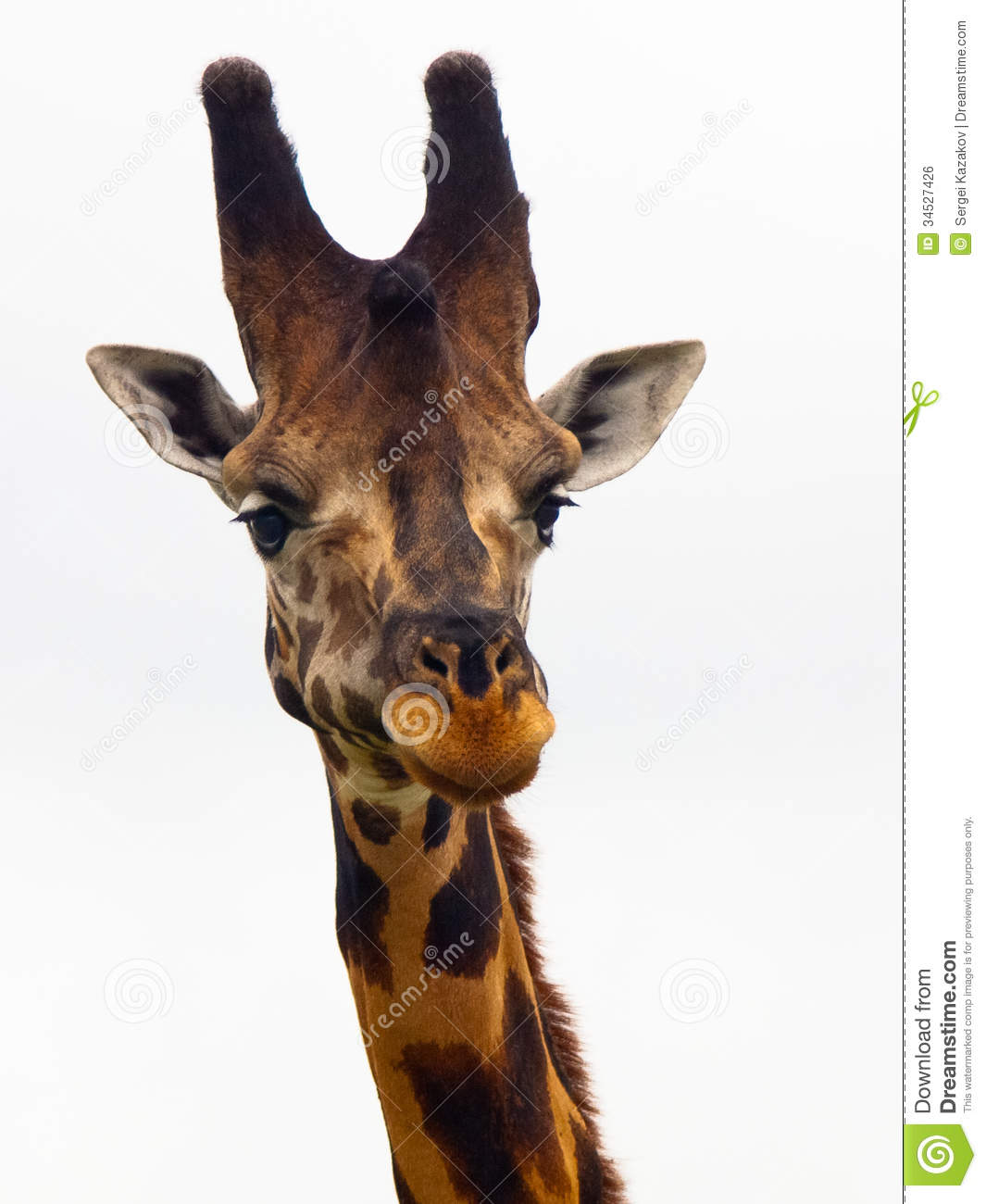 Giraffe head close up - photo#14