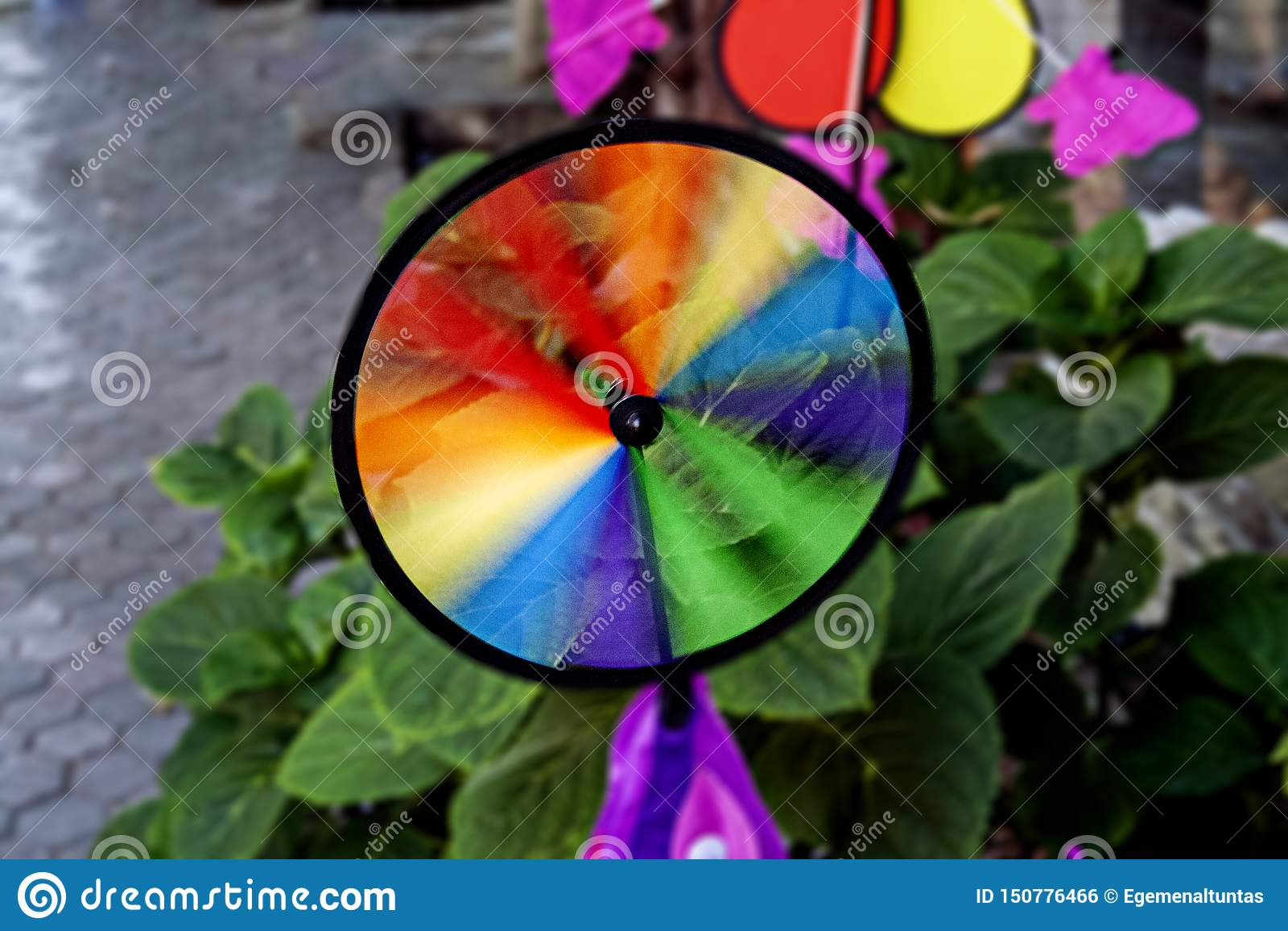 Girandola variopinta dell arcobaleno