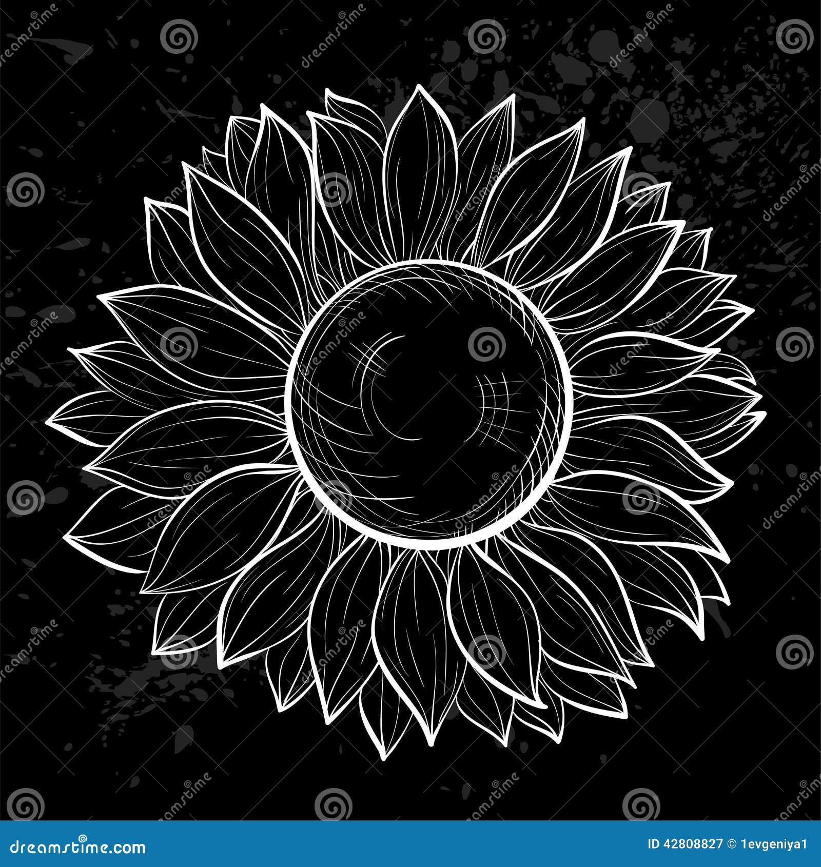 Girasol Blanco Y Negro Hermoso Aislado Stock De Ilustración