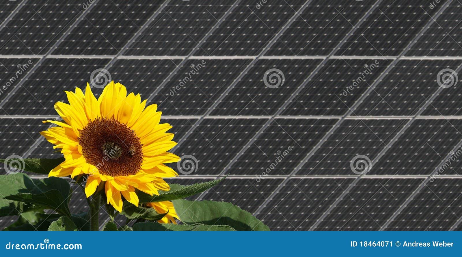Girasole davanti ai comitati solari