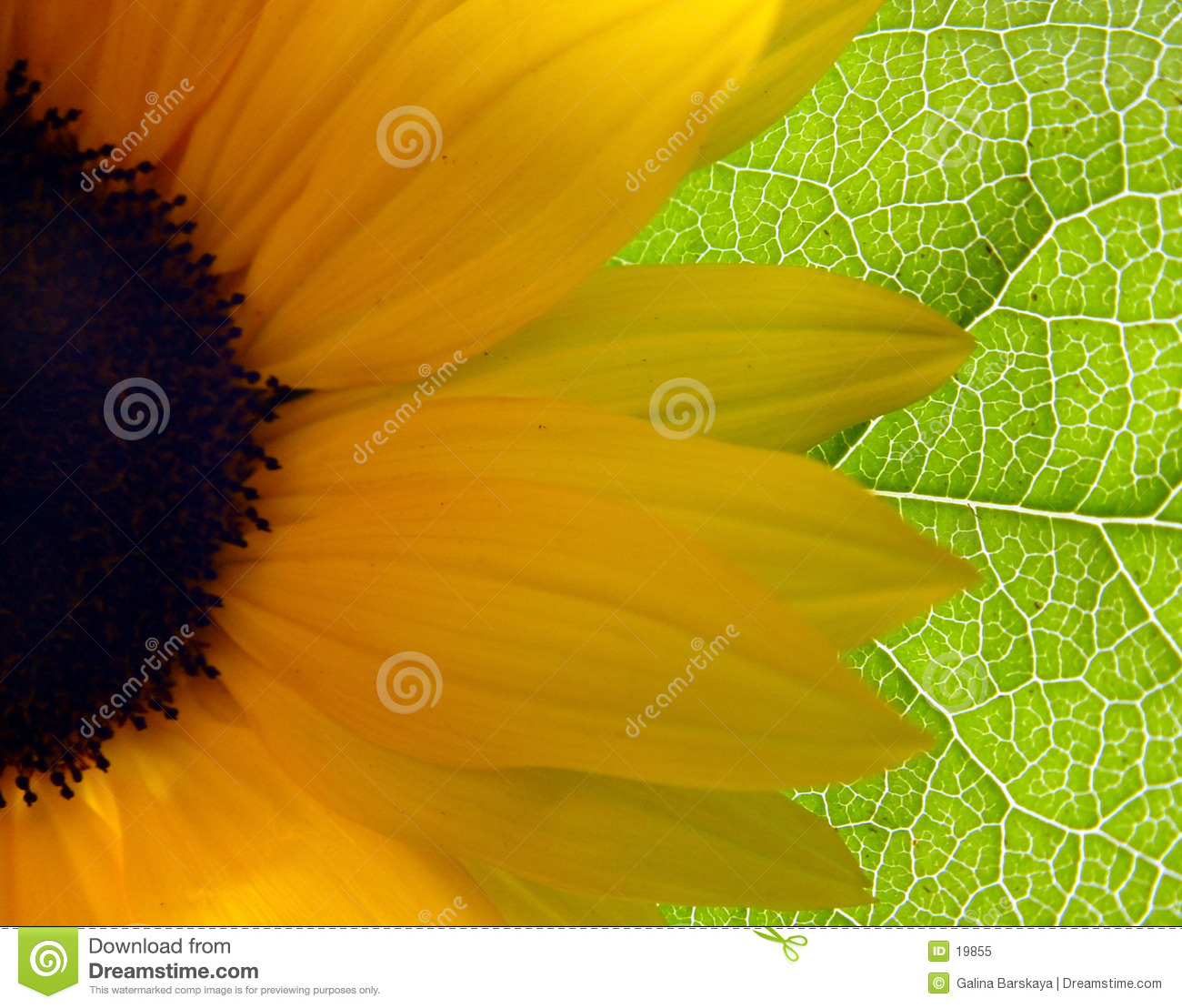 Girasole luminoso