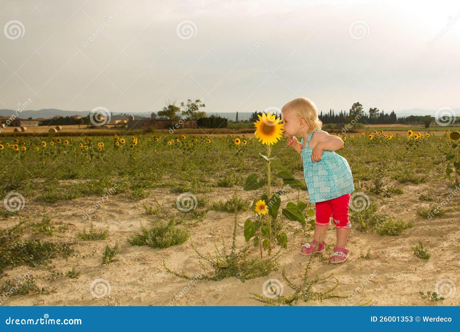 Girasole sentente l odore del bambino
