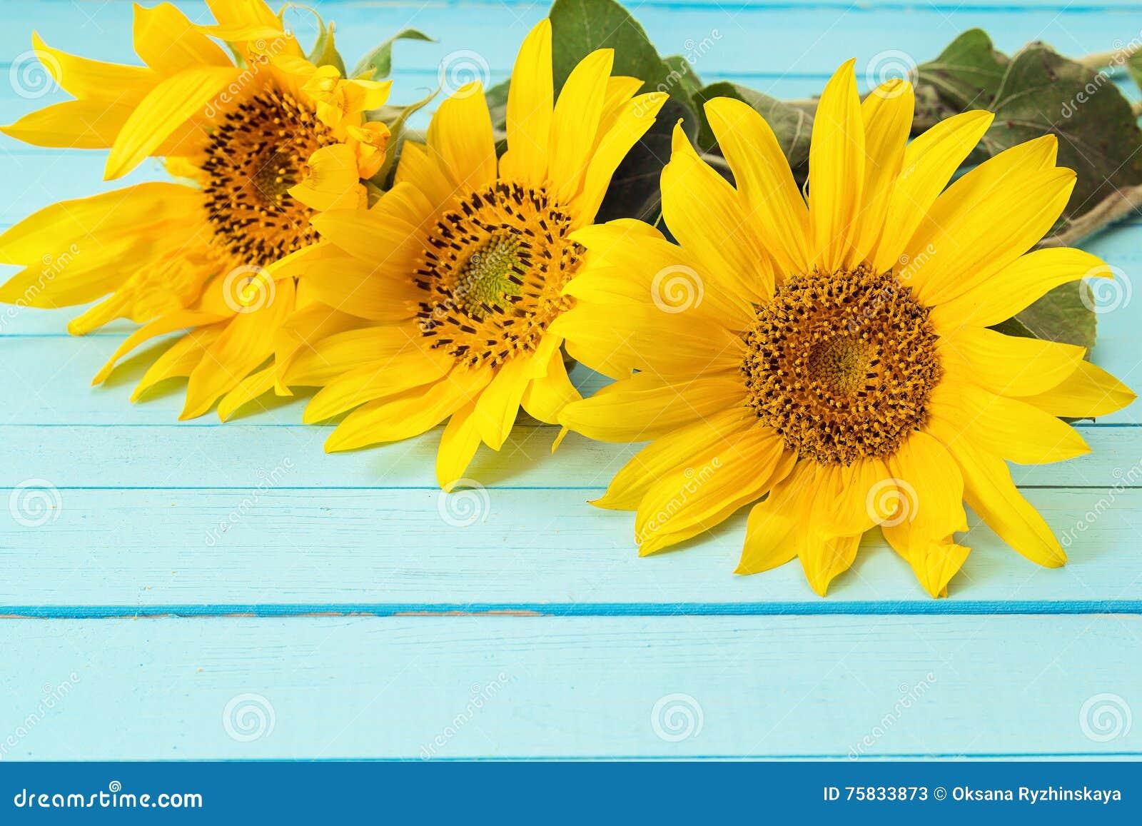 Fondos De Pantalla Fondo De Tablero De Madera De Colores: Girasoles Amarillos En Un Fondo De Tableros De Madera