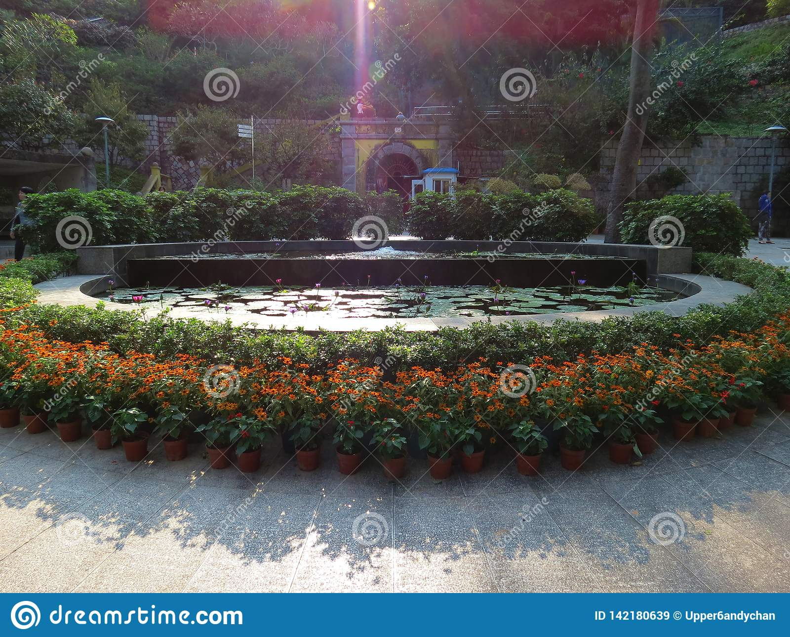 Girasoli e fiori di loto che accolgono gli ospiti all entrata di un parco locale