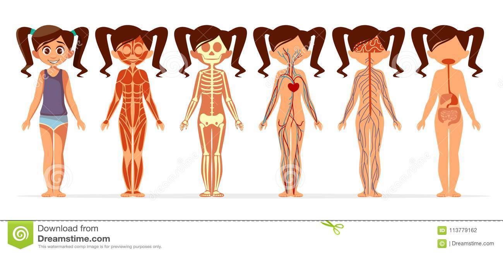 Girl Body Anatomy Vector Cartoon Illustration Of Female Muscular