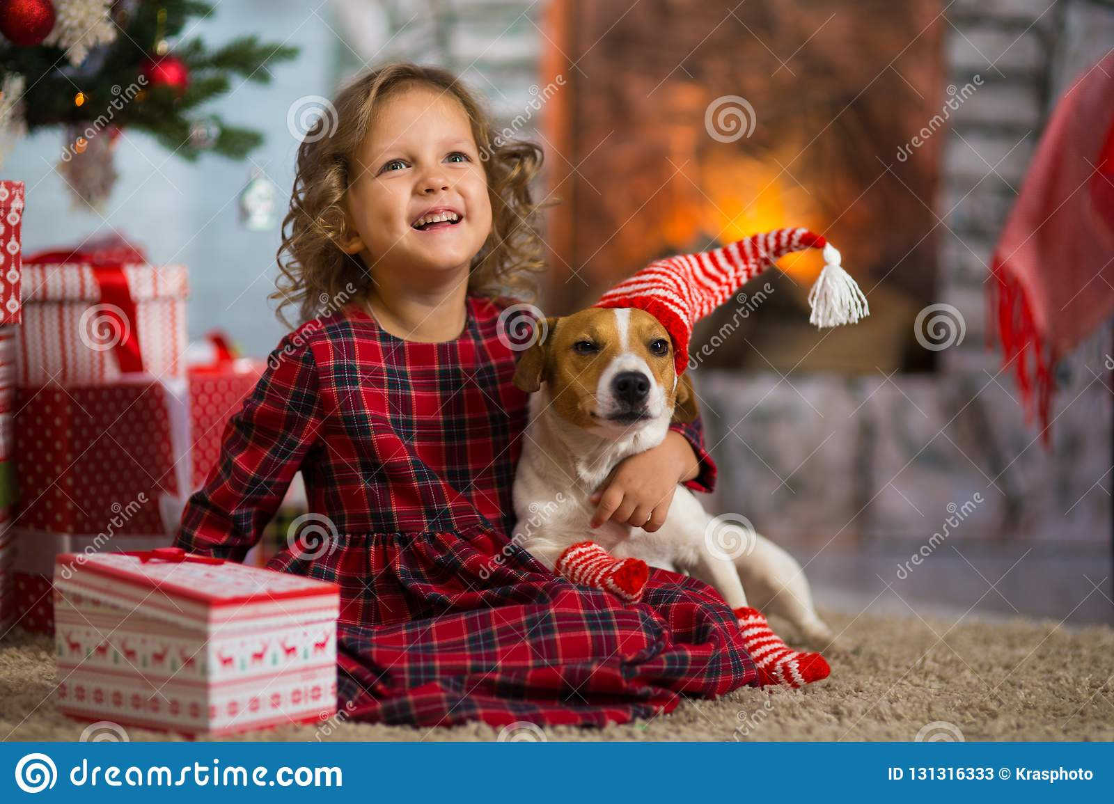 Girl child celebrates Christmas with dog Jack Russell Terrier at