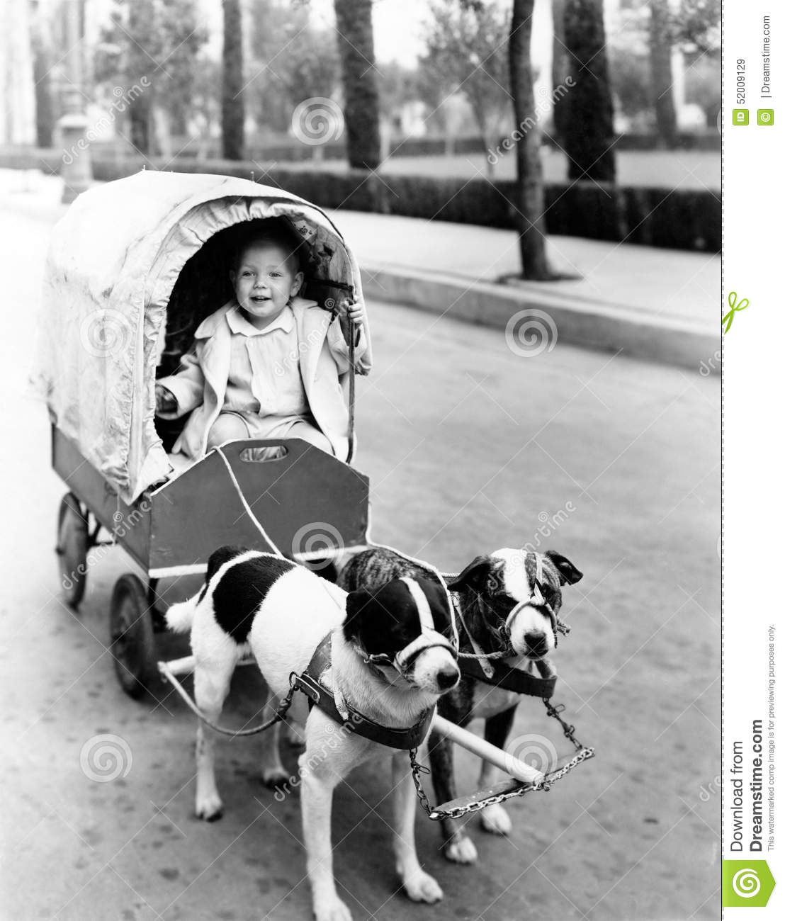 Girl in covered wagon pulled by dogs