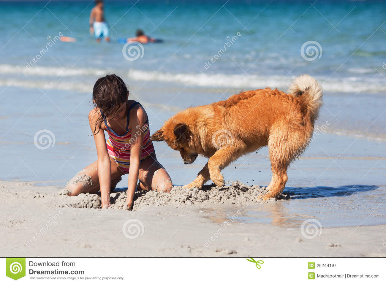 Girl and dog digging a hole at the beach