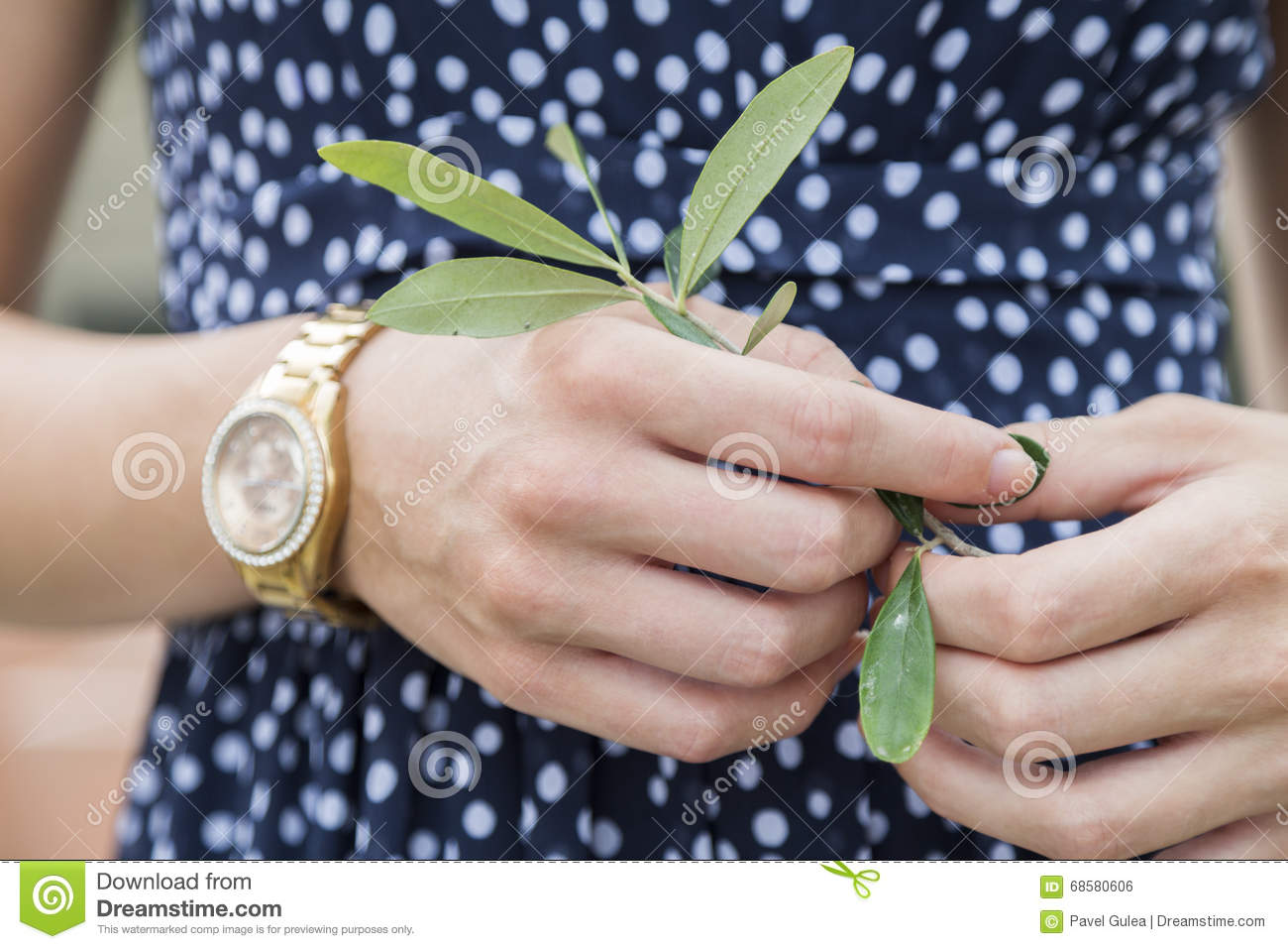 Girl In Dress, Hands Holding Branch With Green Leaves. Stock Photo ...