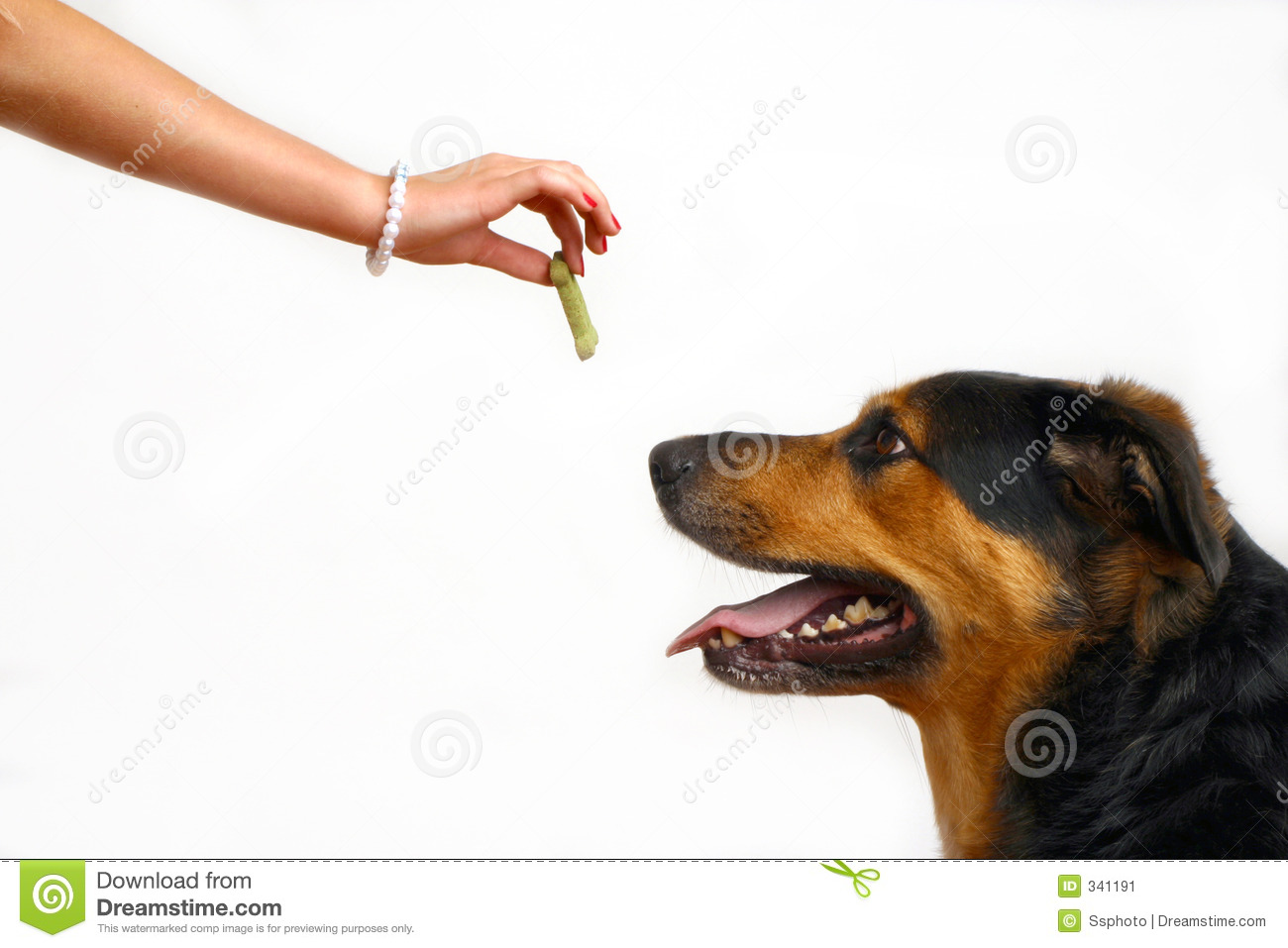 Dog Eating Snaiks