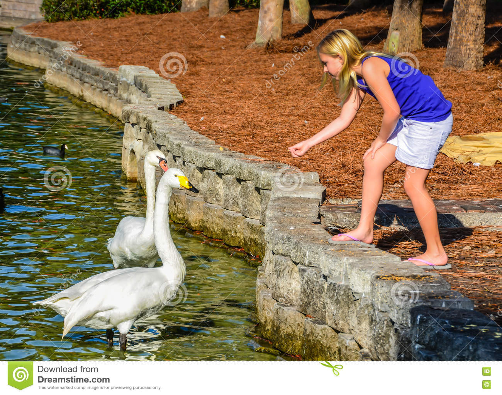 Girl Feeding Swans