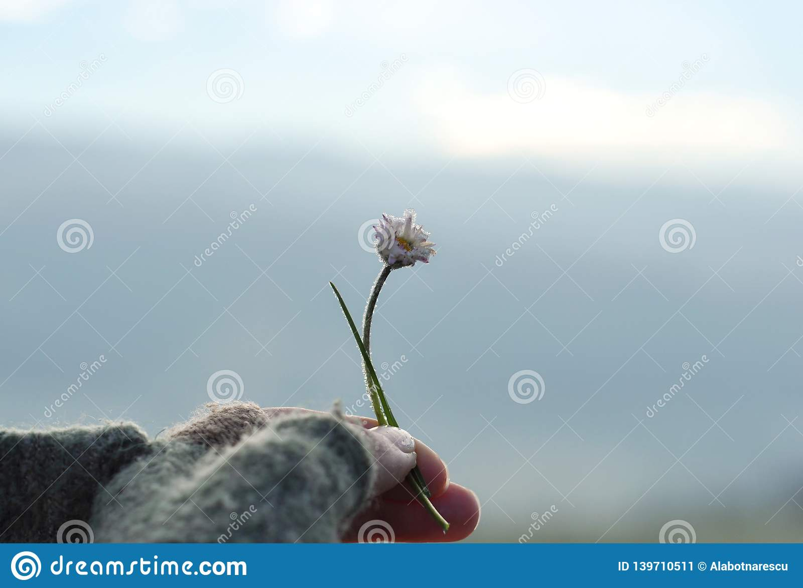 Girl with glove hand holding a beautiful white Daisy on the horizont. Beautiful tranquil nature represent peaceful moment