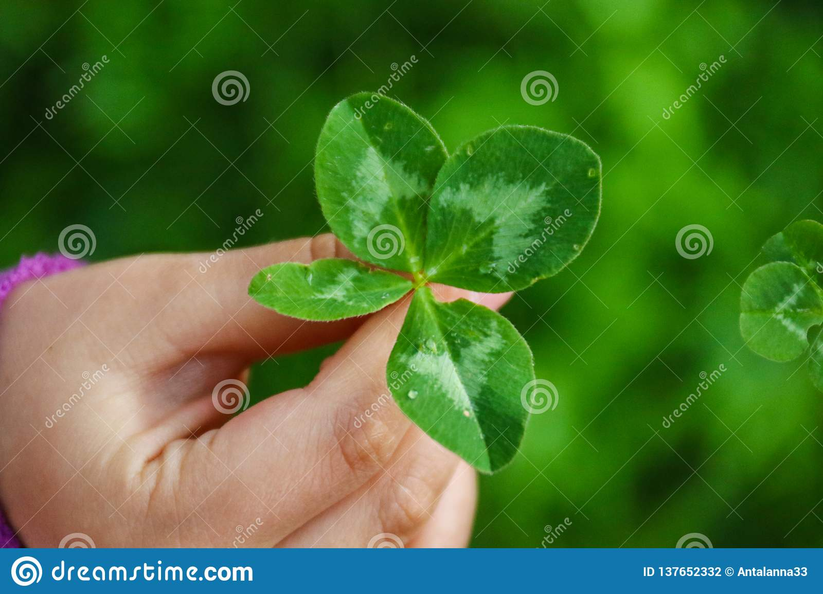 A Girl Holding A Four-leaf Clover  Stock Photo - Image of